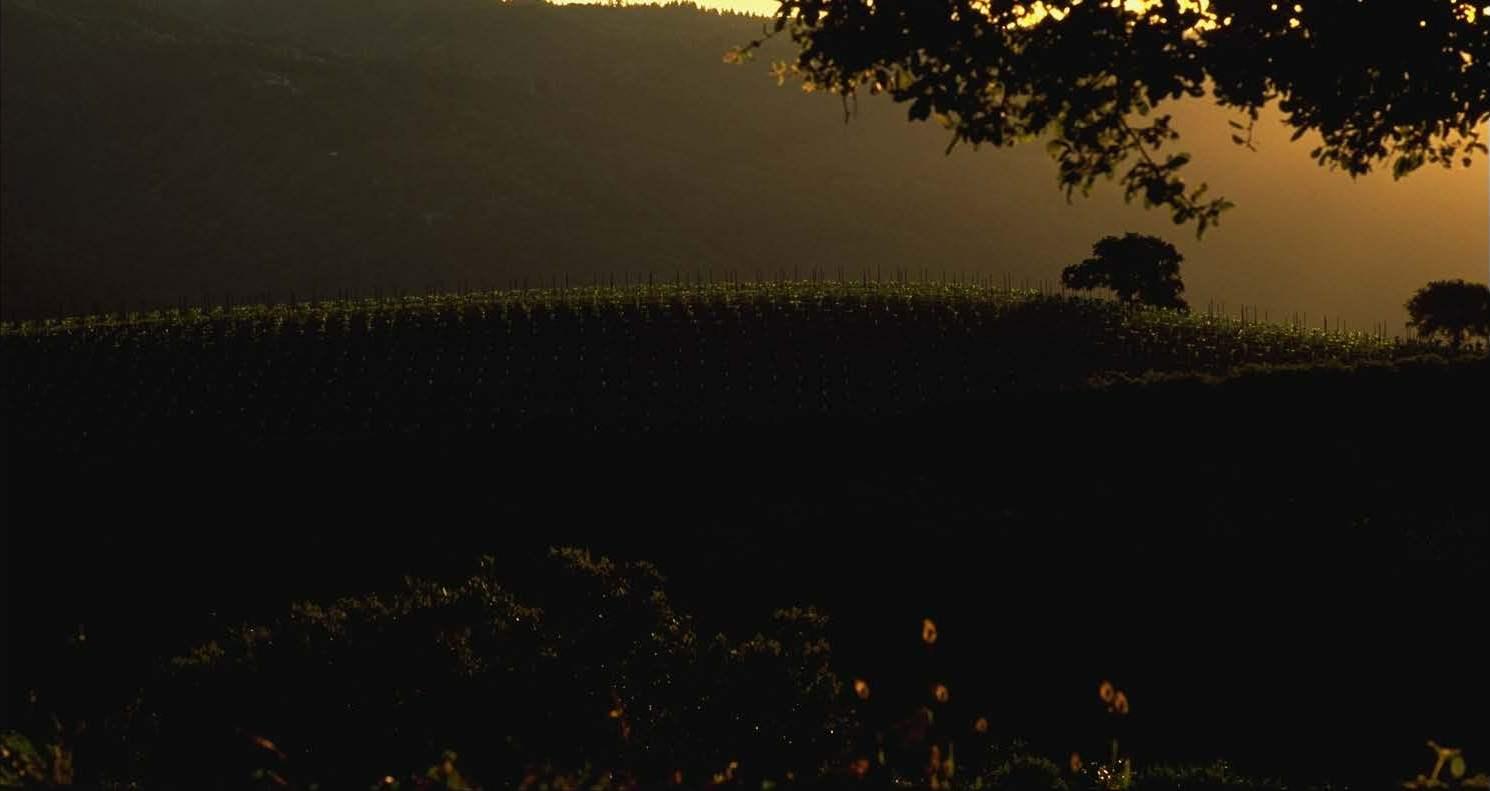 Mt Eden Chardonnay Vineyard